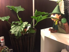 新しい植物♪